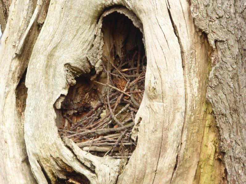 jackdaw nest