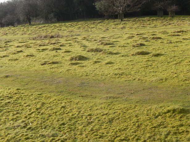 Hill of ant hills