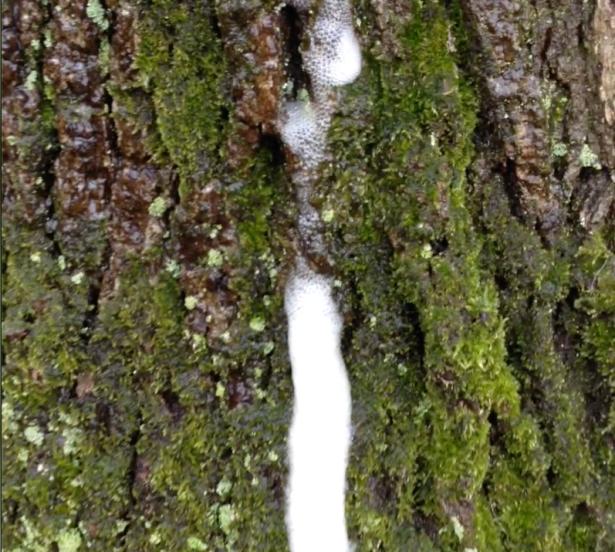 Tree Slime Still
