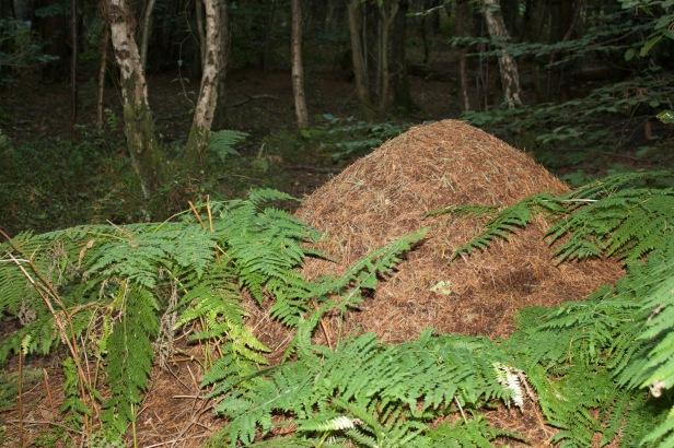 Wood Ant Pile
