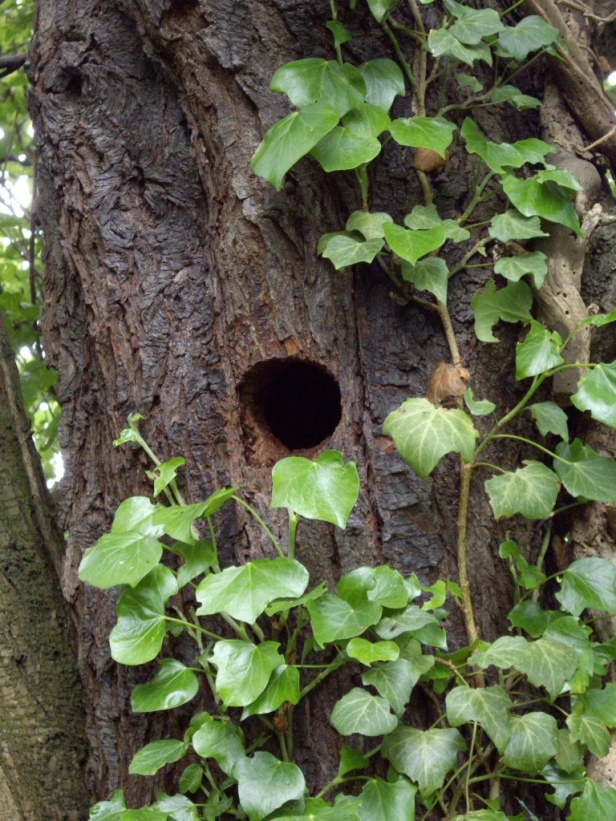 Woodpecker hole 2